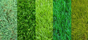 Lawn Care Amp Weed Control Athens Ga